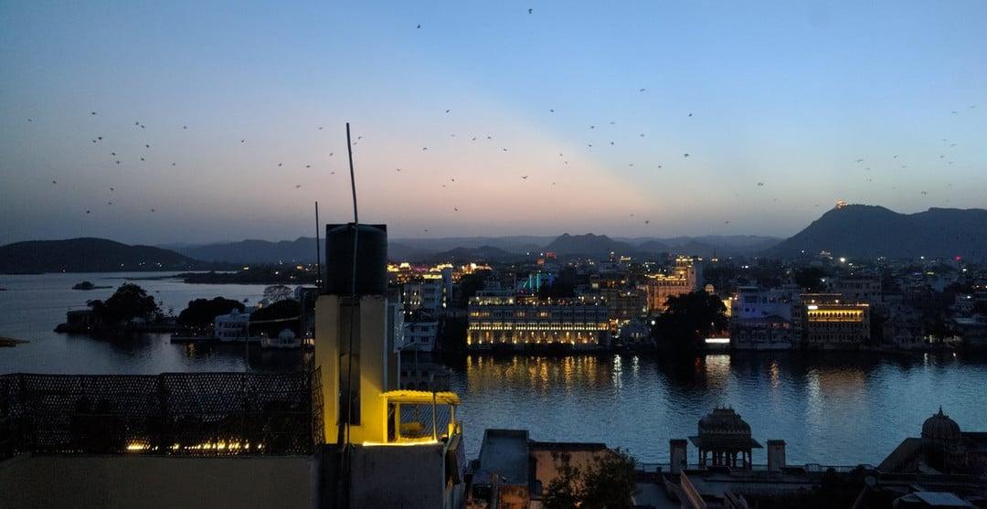 01-Udaipur---Bats